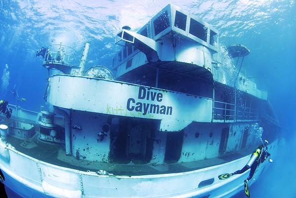 Cayman_kittiwake_diving